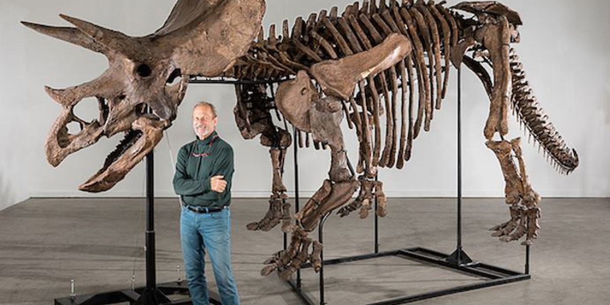Last chance to see some amazing fossilized skeletons for free