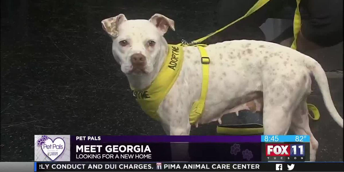 Pet Pals: Adopt Georgia