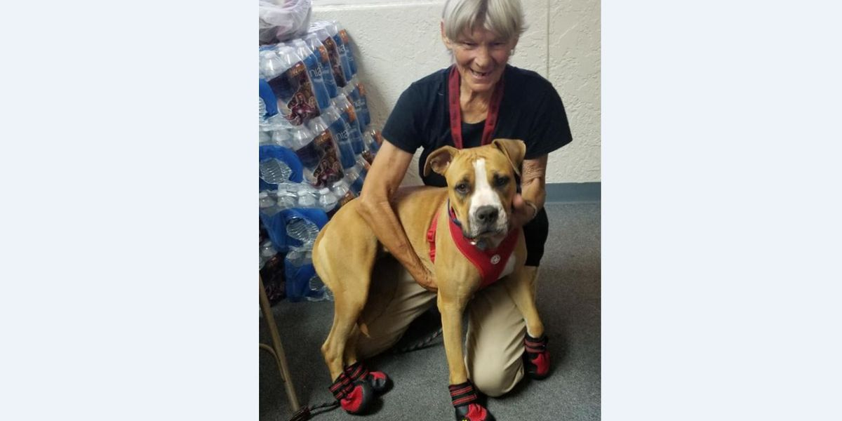 Friends of PACC seeking donations for Pup in Boots project