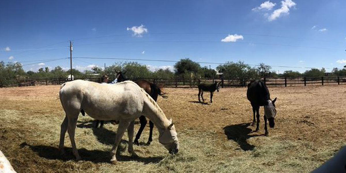 'Southside Seven' recovering well at Wild Hearts Rescue Ranch