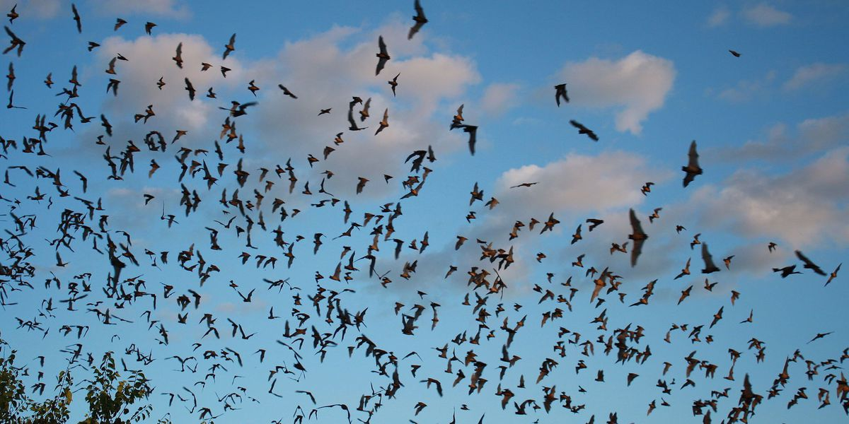 Workers scramble to find new home for bats displaced by construction