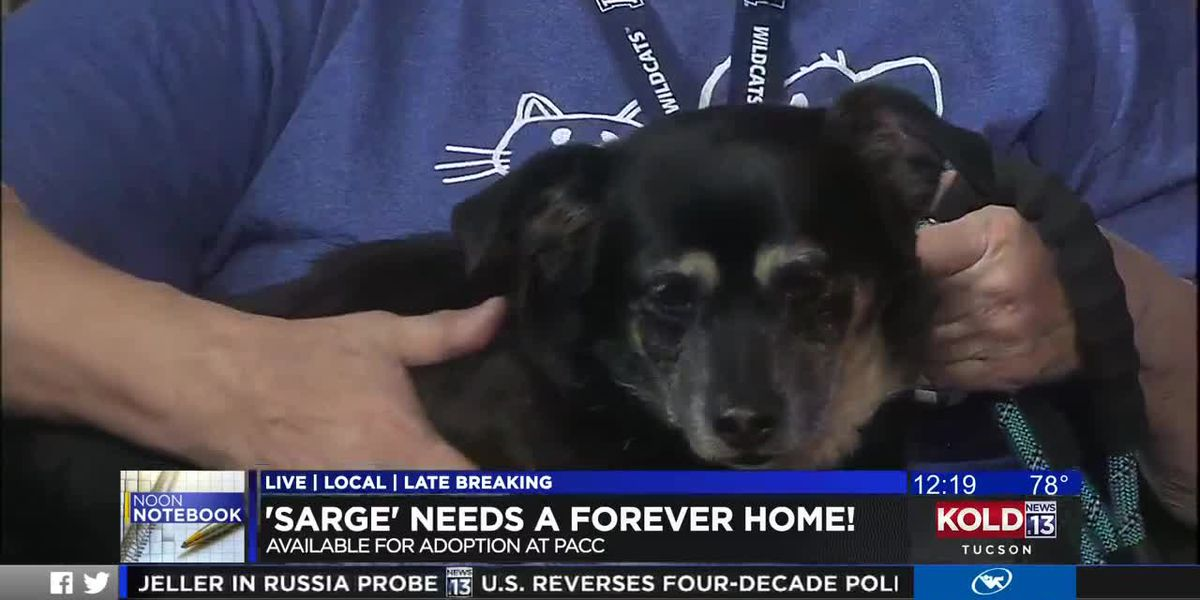 KOLD Noon Notebook: Adopt Sarge