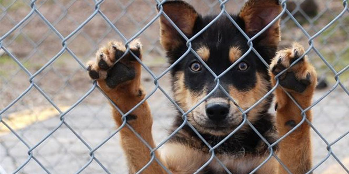Animal shelter trying to ease overcrowding