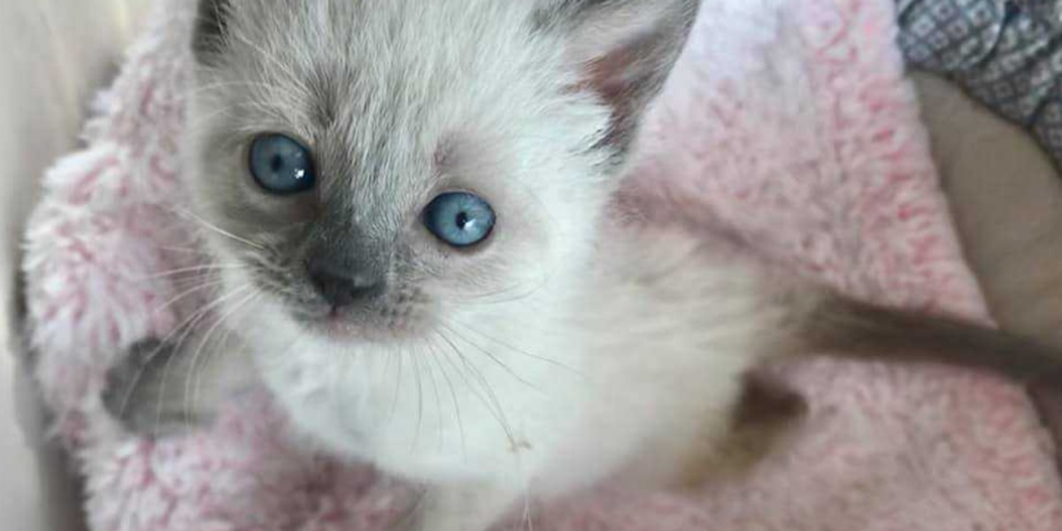 Tucson shelters asking community's help in adopting out kittens