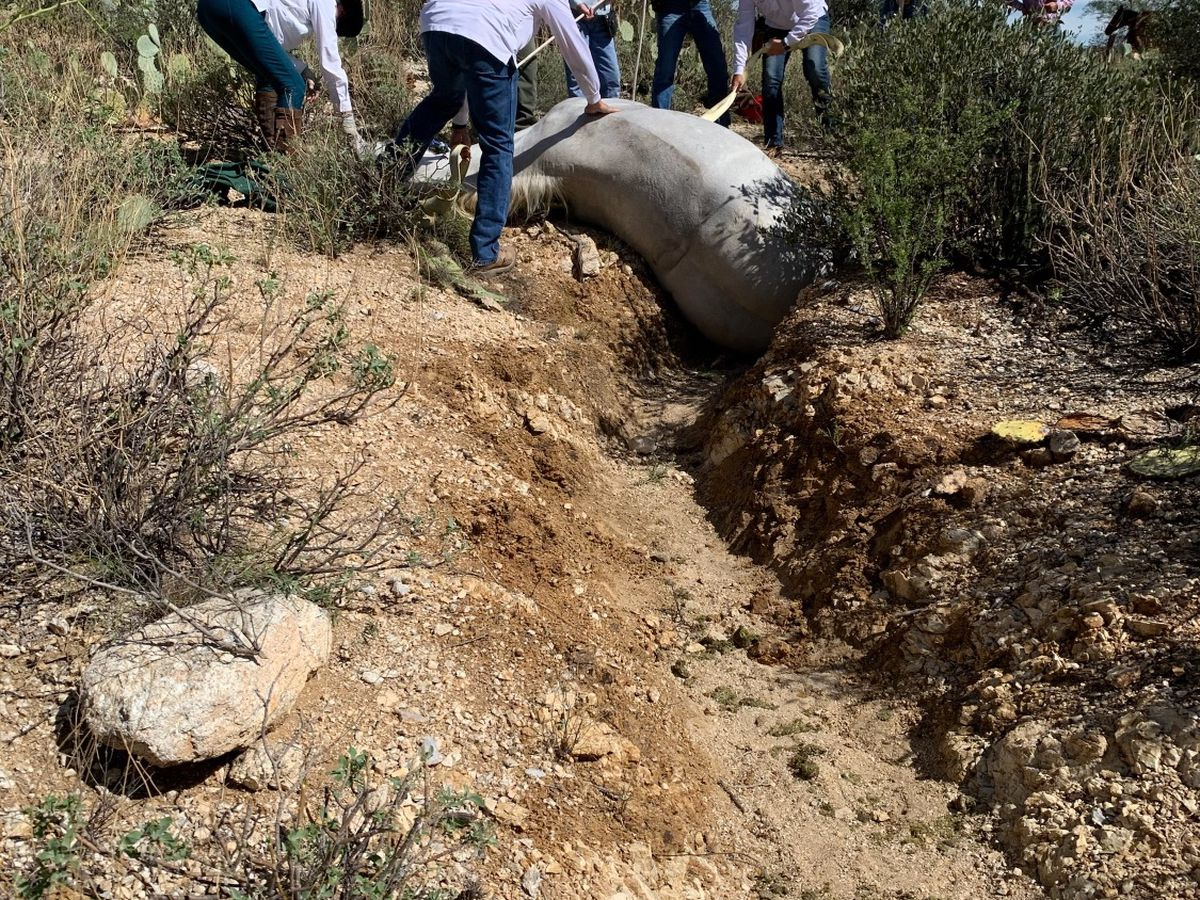 WATCH: Groups band together to save horse from ravine in Pima County
