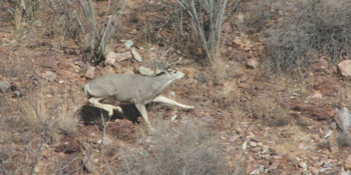 AZ Game and Fish Department conducting aerial big game surveys in January