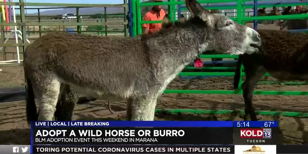 Bureau of Land Management host wild horse, burro adoption event