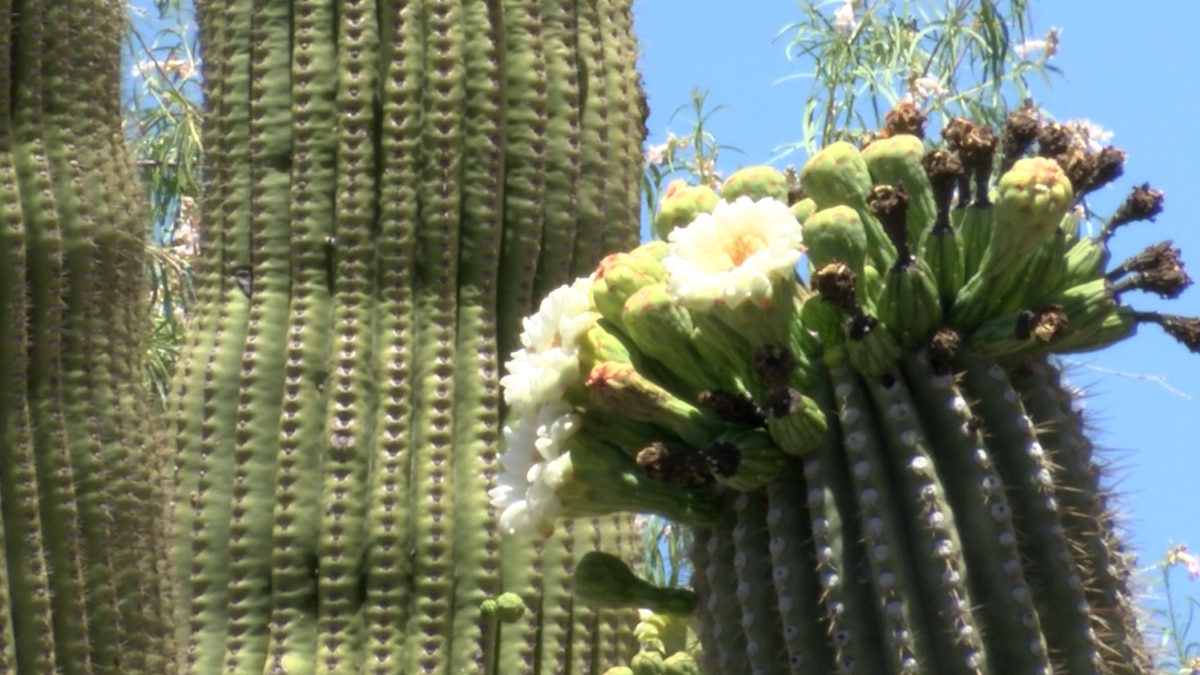 Arizona State Parks busy for Memorial Weekend