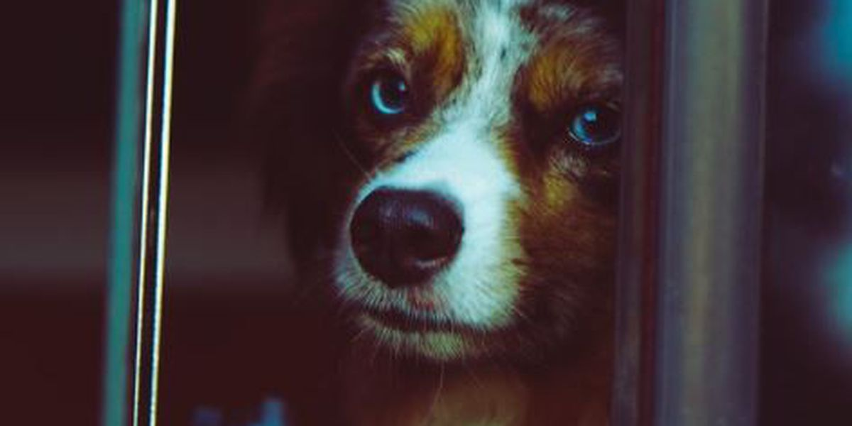 How to calm your pet during monsoon thunderstorms