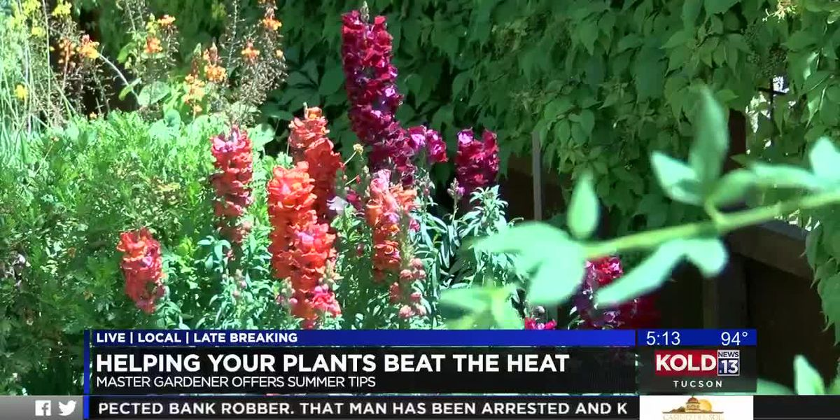 Helping your plants beat the heat