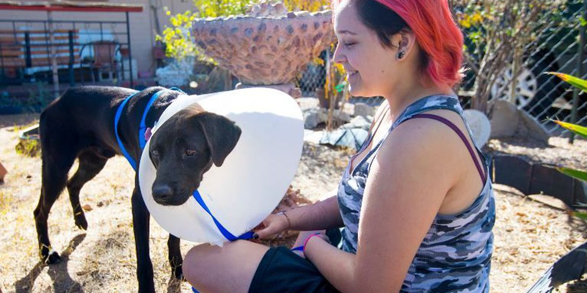 PACC surprises dog rescuer with foster opportunity