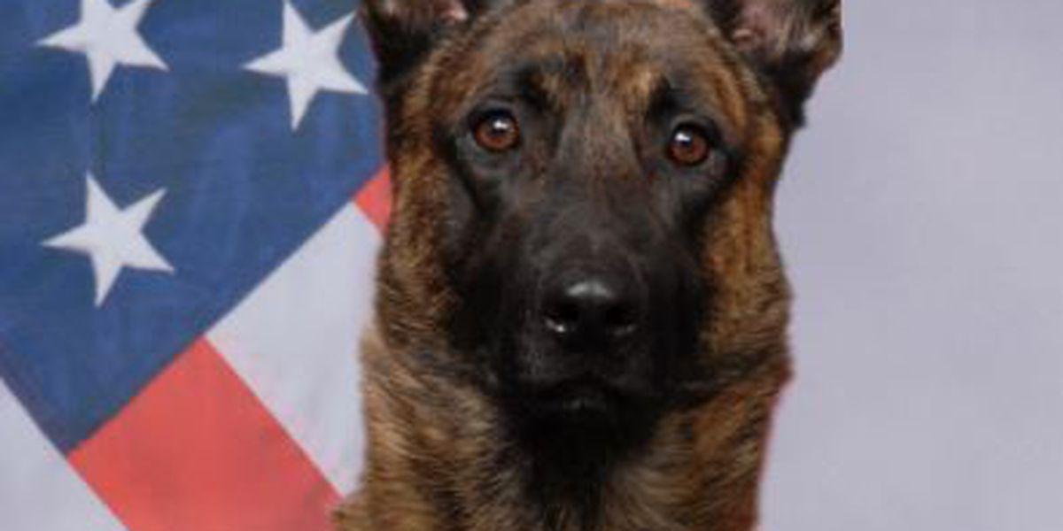MA nonprofit donates body armor to newest Pima Co. Sheriff's K9