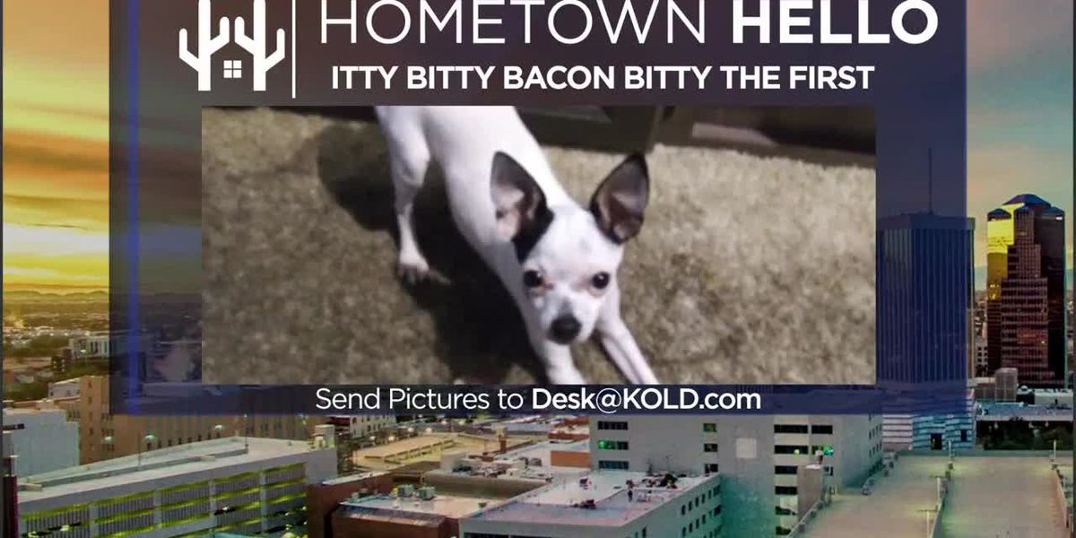 HOMETOWN HELLO: Itty Bitty Bacon Bitty the First