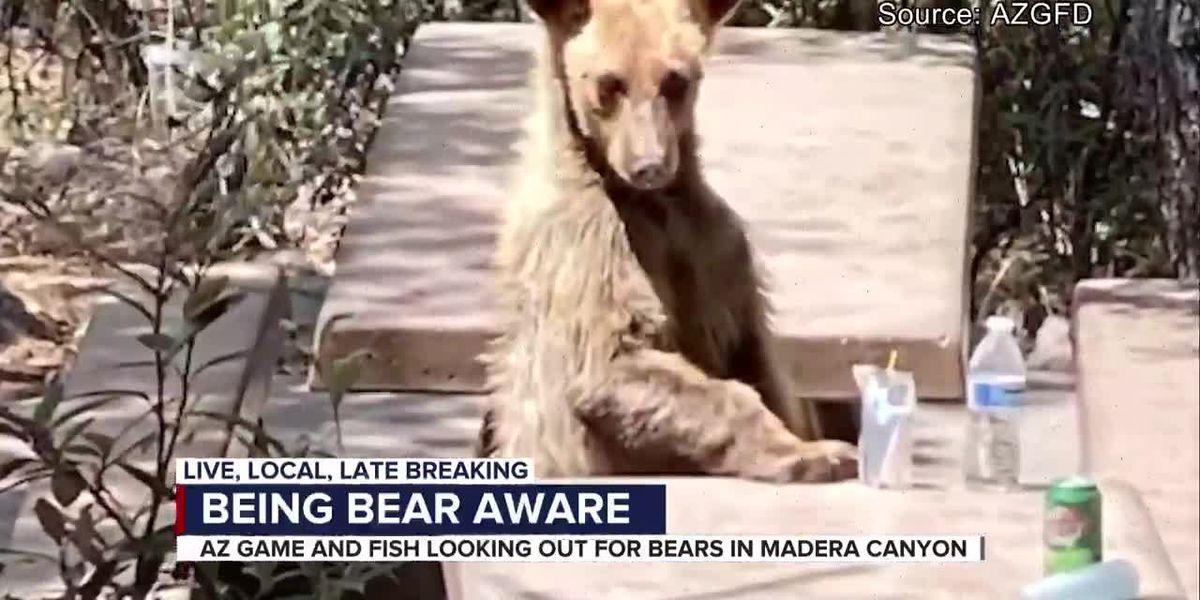 Game and Fish warns of bears in Madera Canyon