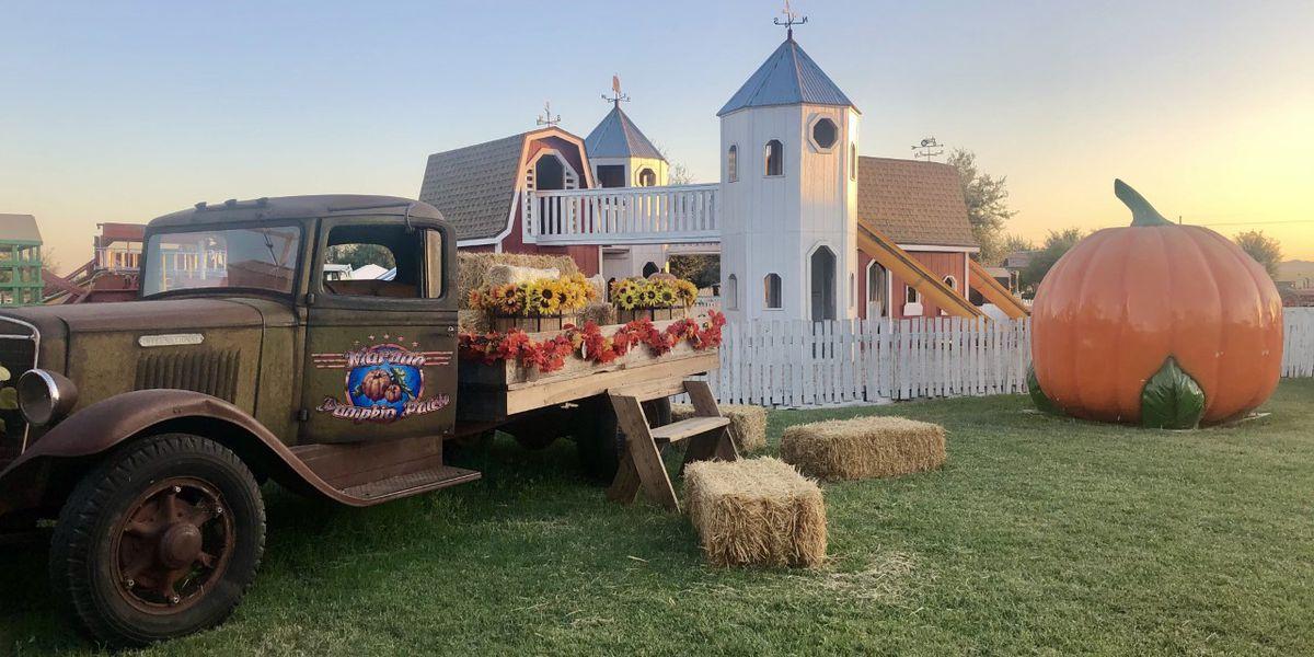 Ready to pick out a pumpkin? Marana Pumpkin Patch opens this weekend