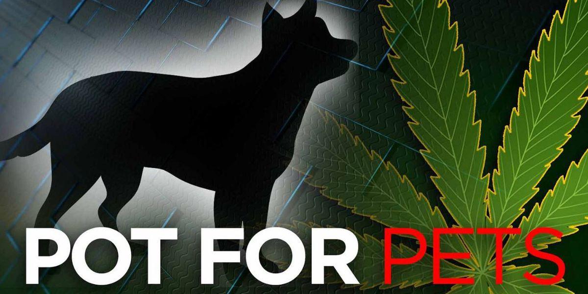 Pot for pets