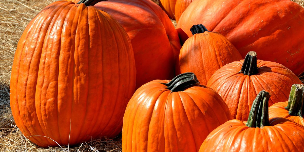 Buckelew Farms closing its pumpkin patch