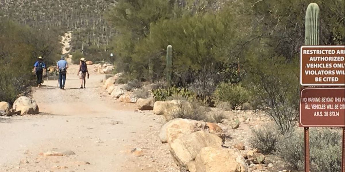 Mountain lion strolls past trail camera in Sabino Canyon