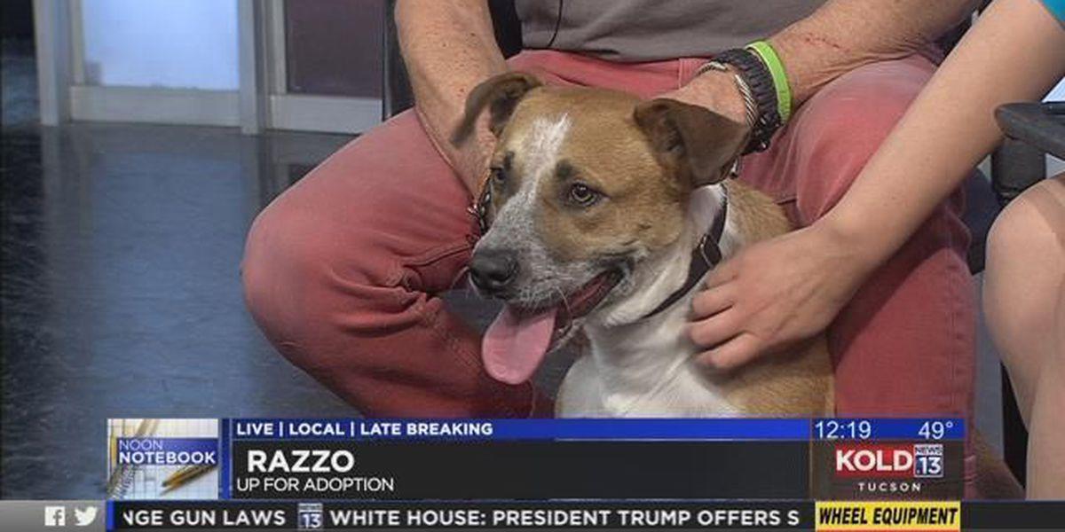 Tuesday's Tail: Meet Razzo!