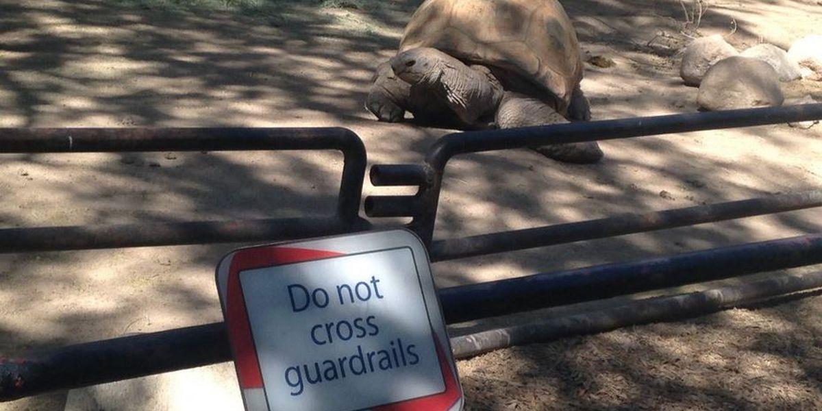 Reid Park Zoo habla seguridad después de gorila incidente en Ohio