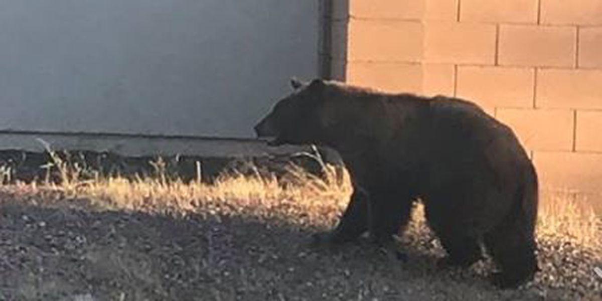 Bear sighting, warning in Santa Cruz County
