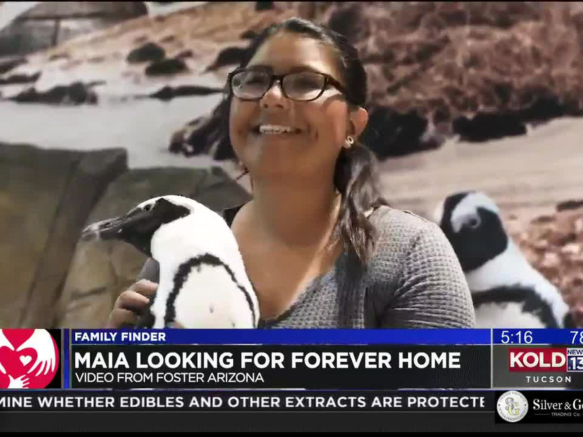Family Finder: Maia looking for a forever family