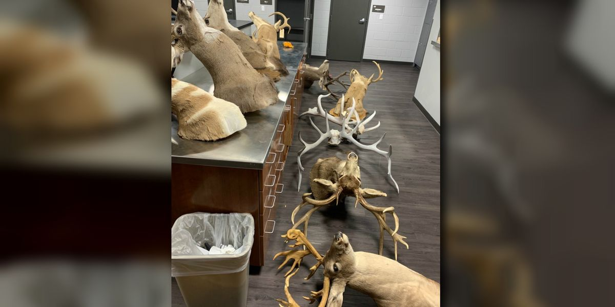Oro Valley police recover stolen taxidermy