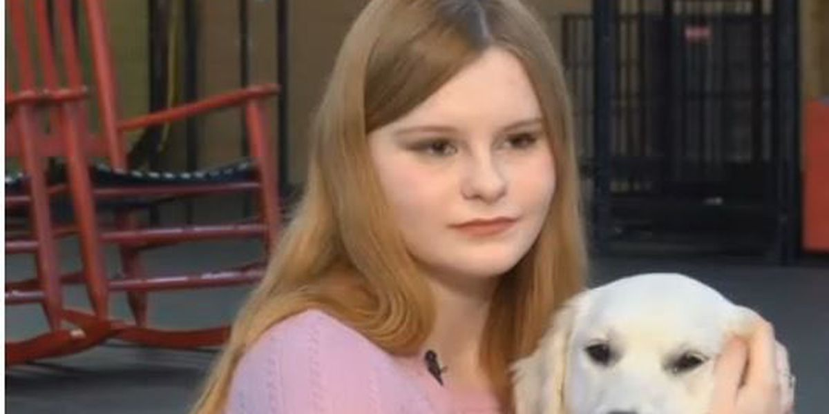 KOLD INVESTIGATION: Is that really a service dog?