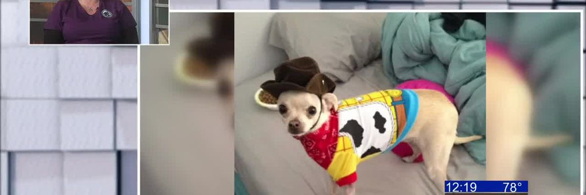 KOLD Noon Notebook: Keeping your pets spook free on Halloween