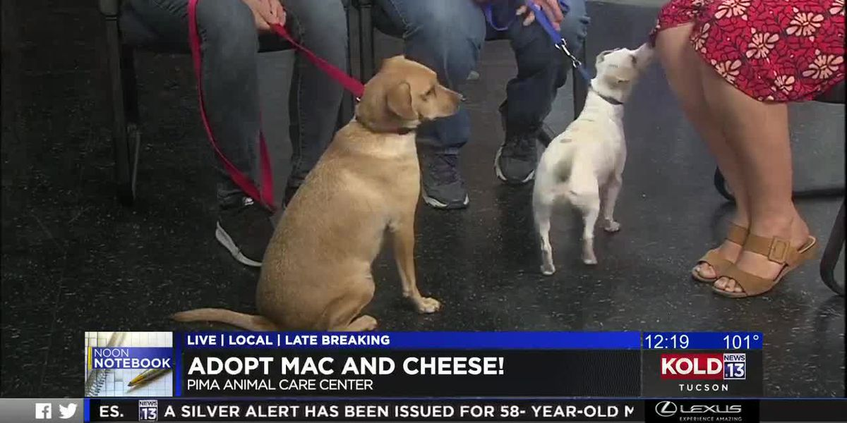 KOLD Noon Notebook: Adopt Mac and Cheese