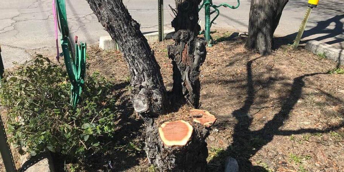 Tree trouble for midtown neighborhood