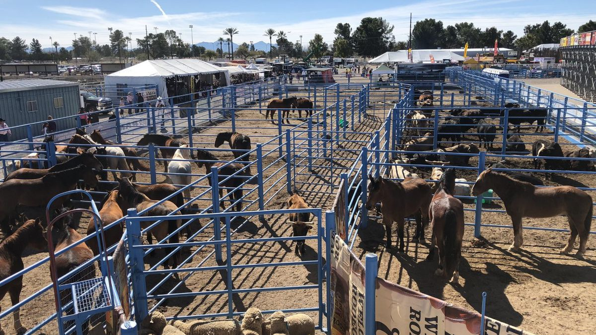 Tucson Rodeo bull rider recovering from injuries