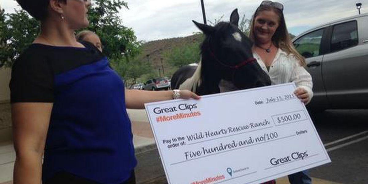 Marana rescue horse receives star treatment at local hair salon