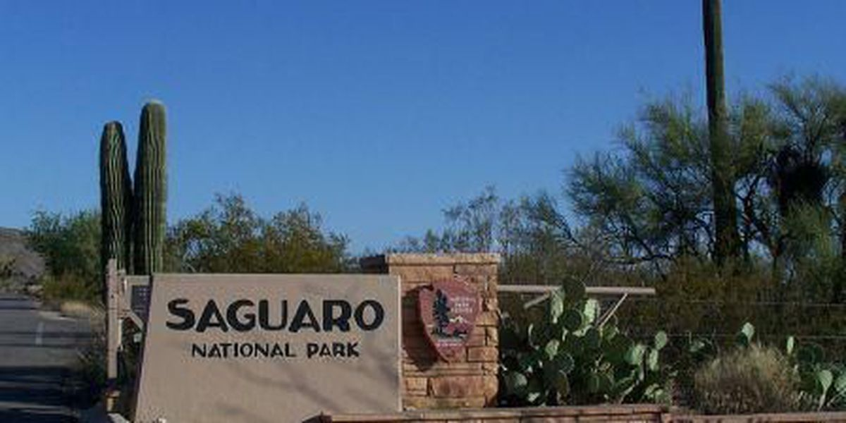 Saguaro National Park summer youth employment opportunity