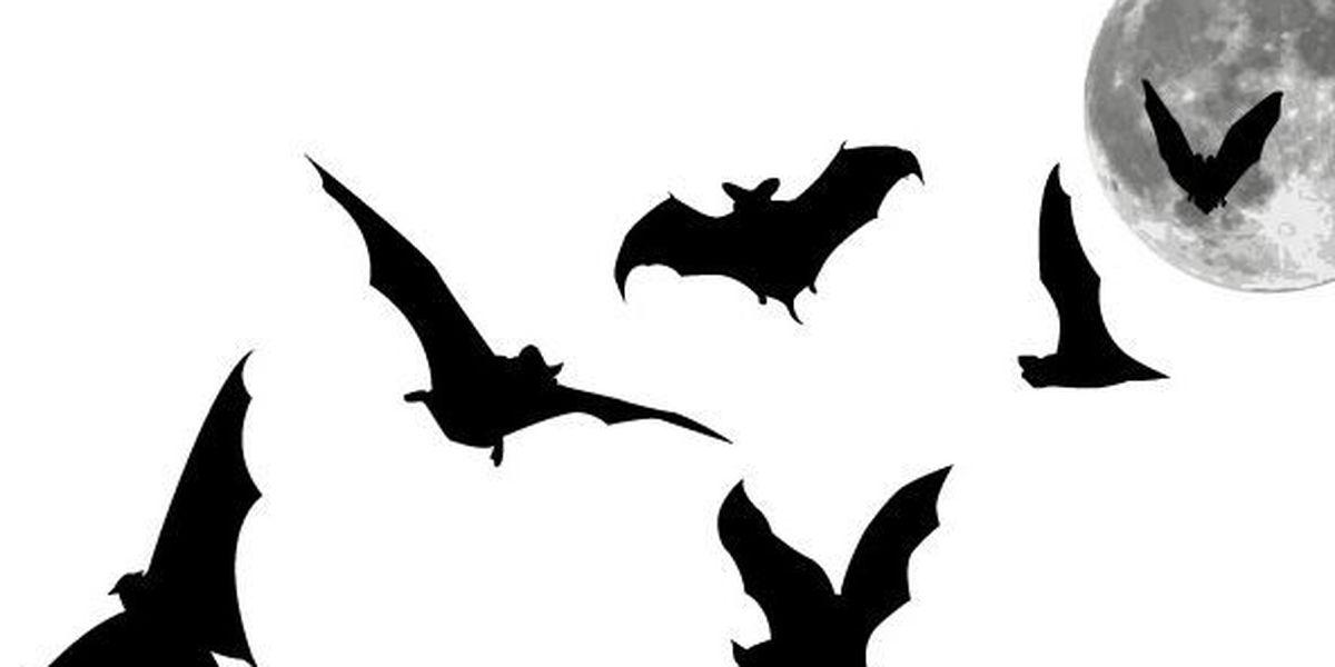 Celebrate Earth Day at Kartchner Caverns 'Bat Day'