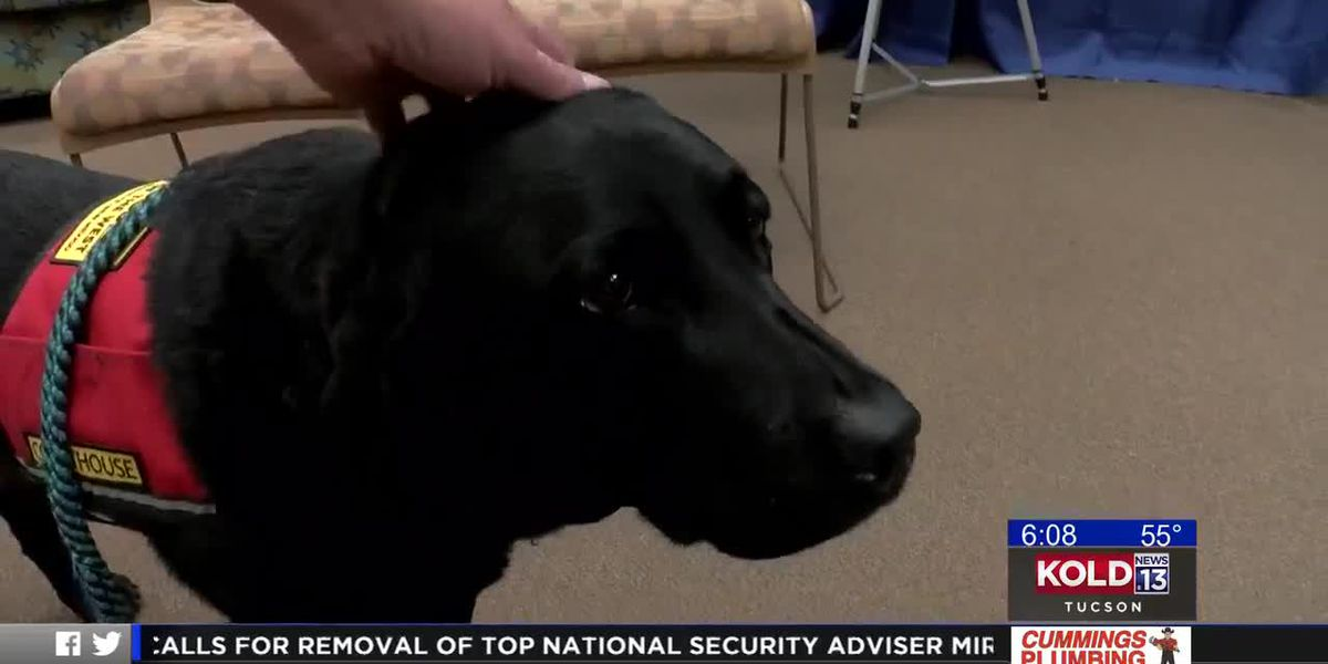 Expansion of courthouse dogs program that provide emotional support to victims