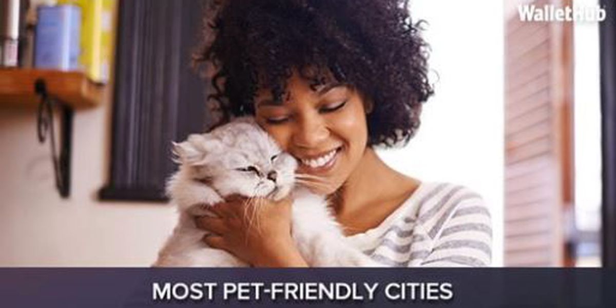 Two AZ cities top the list of pet friendly cities in U.S.