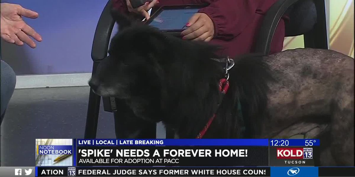 KOLD Noon Notebook: Adopt Spike