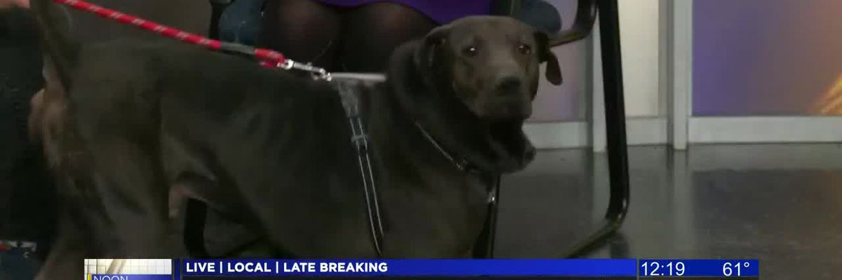 KOLD Noon Notebook: Adopt Smokey