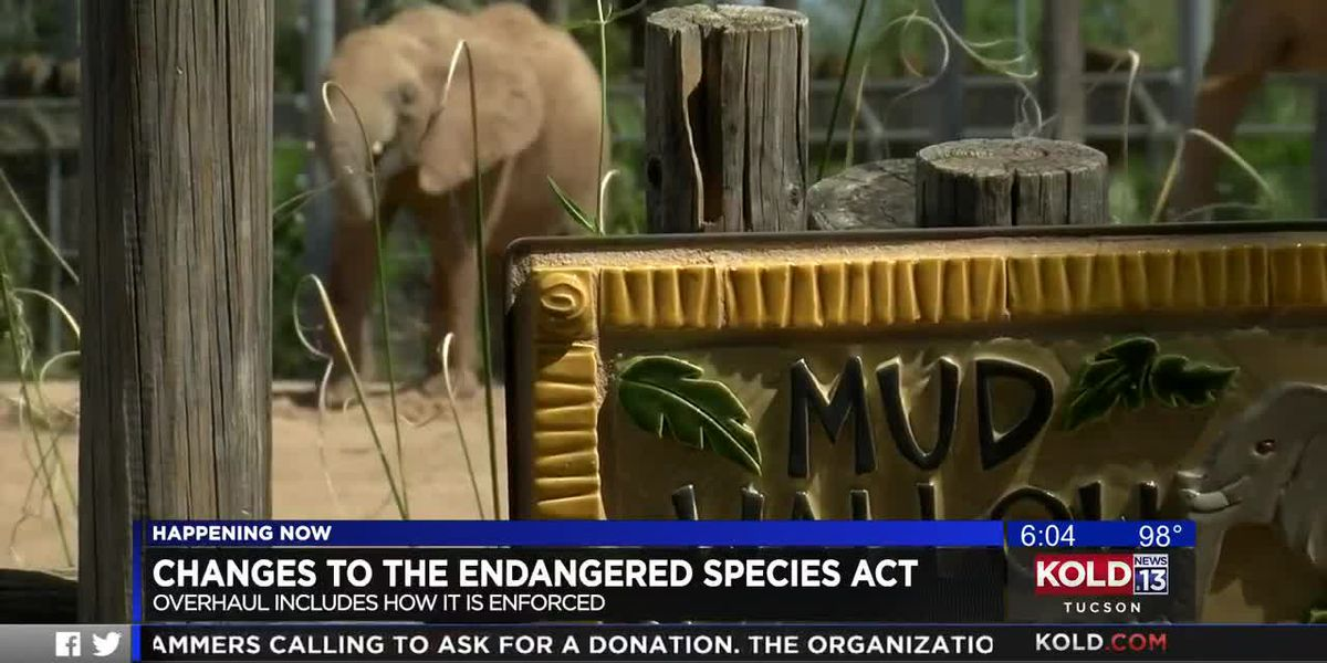 Changes in Endangered Species Act will face legal challenges