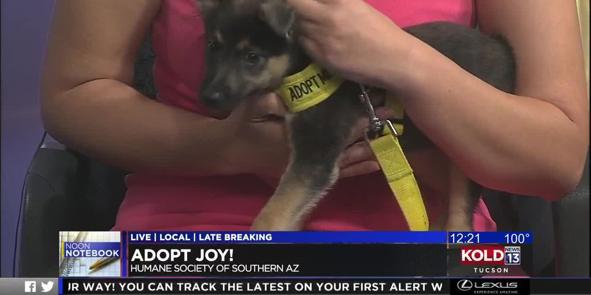 KOLD Noon Notebook: Adopt Joy