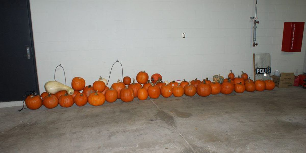Missouri police save Halloween by squashing pumpkin theft ring
