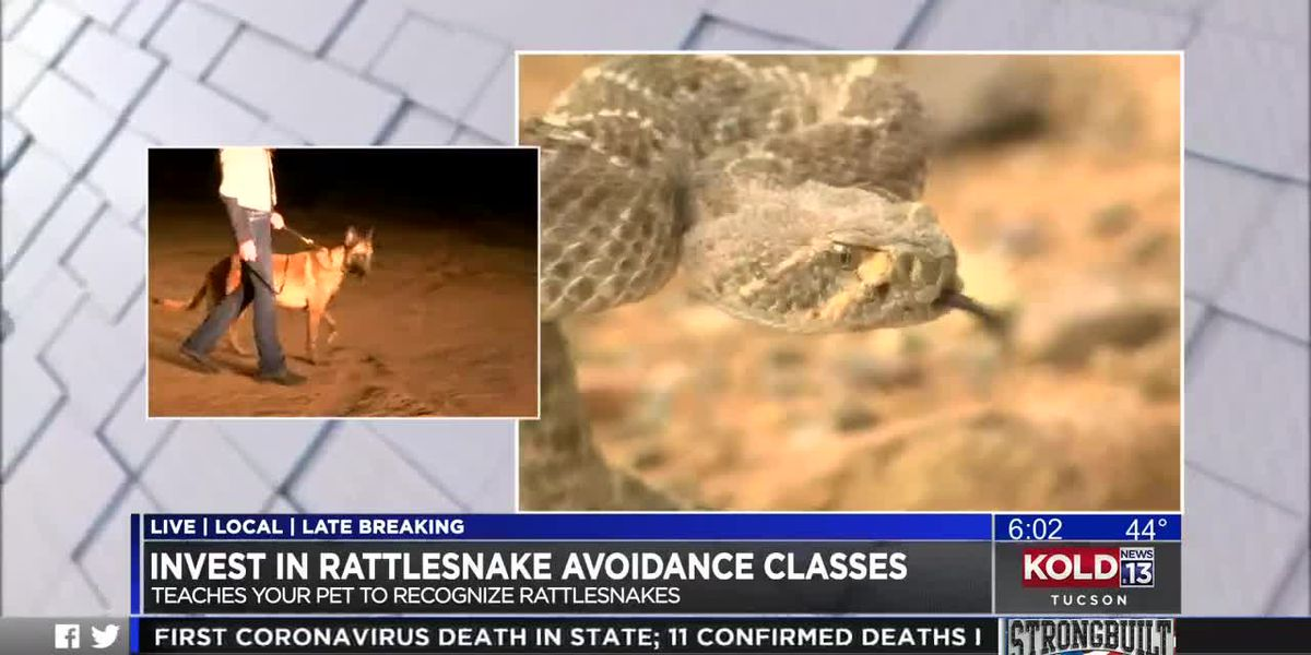 Avoidance classes teach pets to recognize rattlesnakes