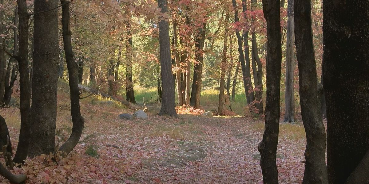Fall colors have businesses seeing green