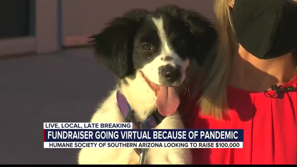 Pandemic pushes Humane Society of Southern Arizona to move its biggest fundraiser online