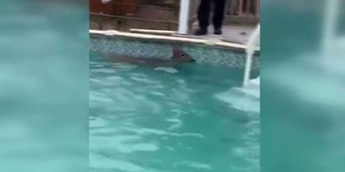 WATCH: Fire department rescues deer from Ohio pool: 'It was just awesome'