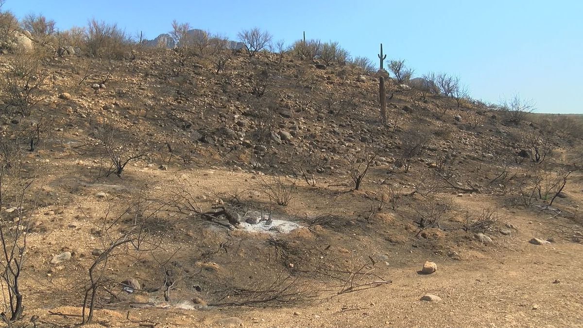 Catalina State Park preparing to reopen Sunday