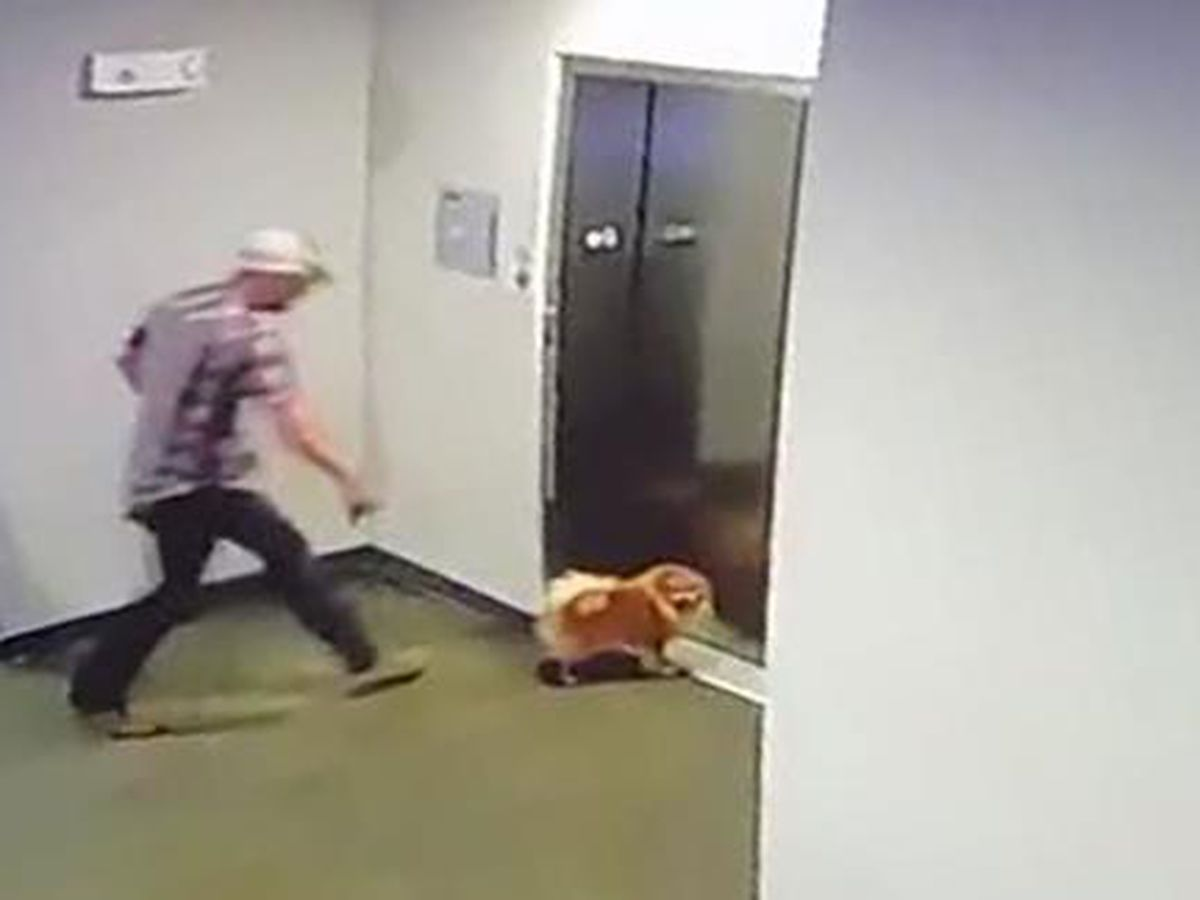 Texas man credited with saving dog after leash gets stuck in elevator