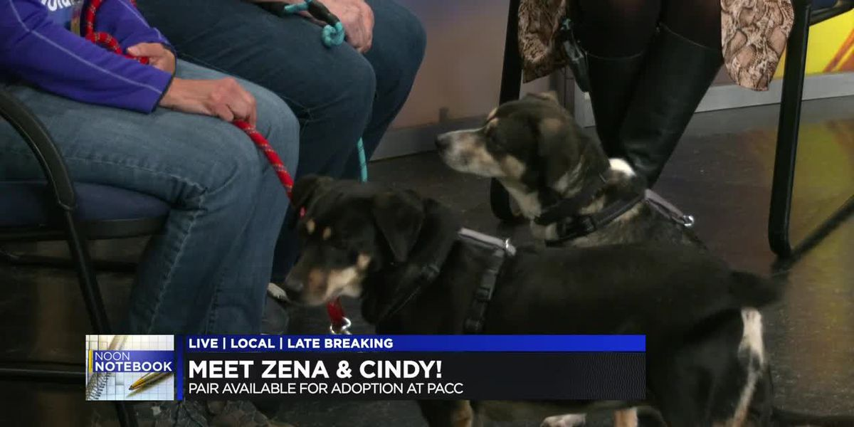 KOLD Noon Notebook: Adopt Zena and Cindy