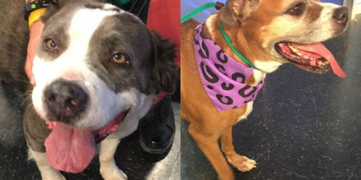 Tuesday Tail(s): Meet Calliope & Jessie